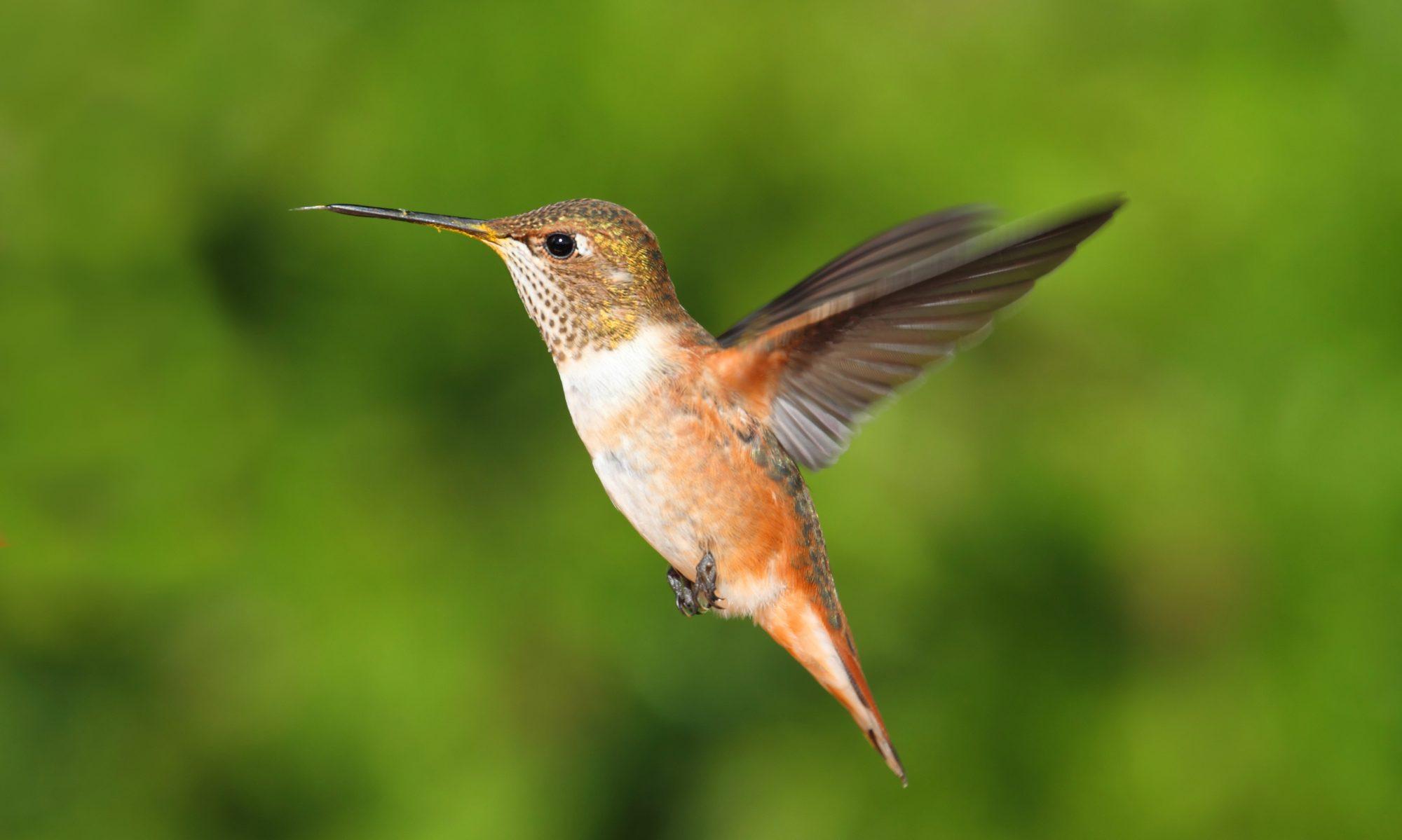 Cuboid Hummingbird Feeder